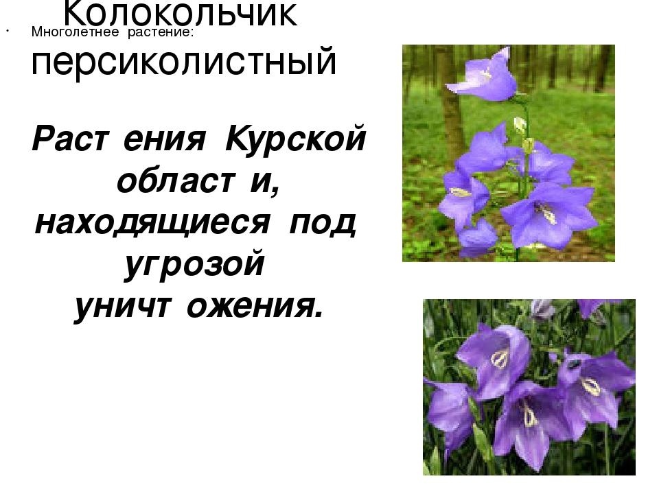 Растения курской области фото и описание