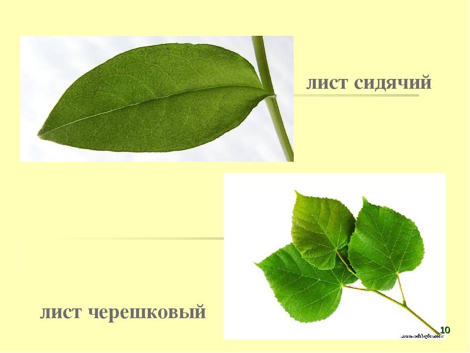 solistka-gruppi-leningrad-alisa-voks-golaya