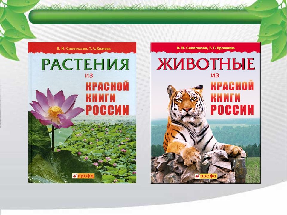 Несколько фотографий животных и растений из красной книги