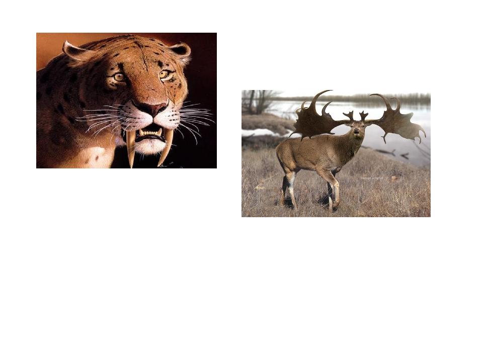 Картинки саблезубый тигр гагарка большерогий олень