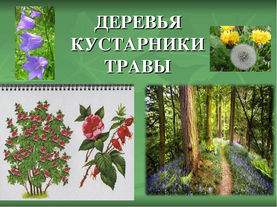 так картинки для презентации деревья и кустарники сапоги