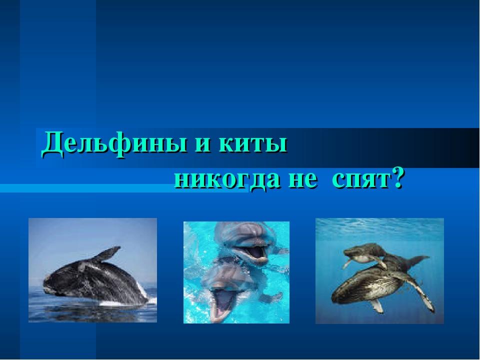 Дельфины и киты никогда не спят?