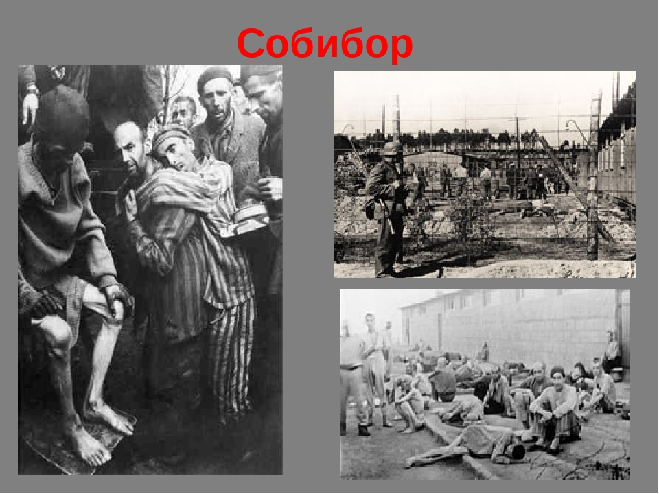 the sobibor extermination camp history essay Escape from sobibor (efs) (vhs/dvd, 1987) is a retelling of actual events that occurred in the sobibor concentration camp in poland, detailing the largest escape from a nazi camp in ww2.