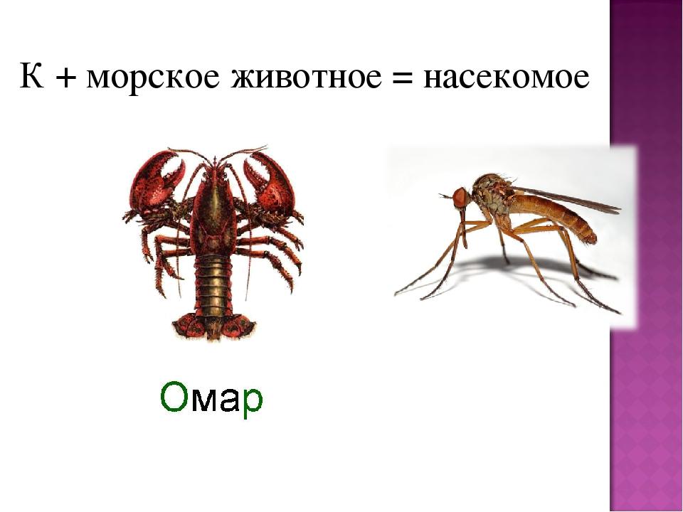 К + морское животное = насекомое