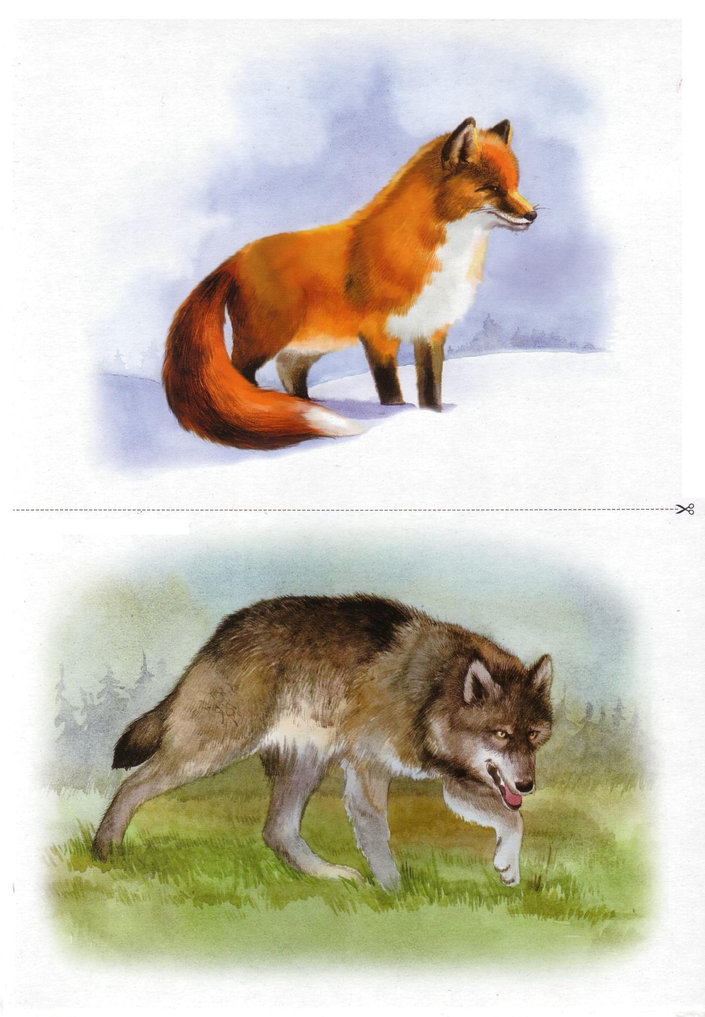 Картинки дикие животные для доу 3