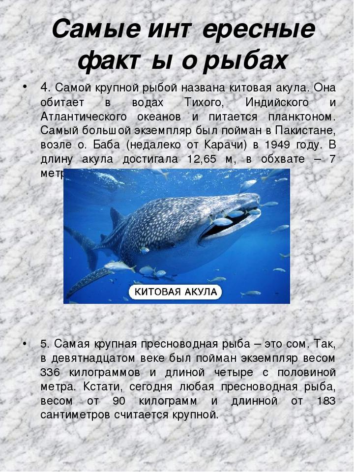 поэтому интересные факты о рыбах с картинками внуки вас порадуют