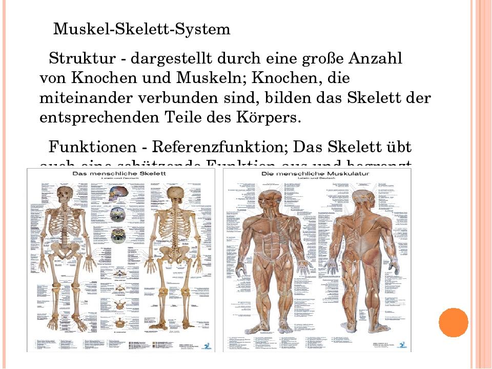 Beste Struktur Des Harnsystems Bilder - Menschliche Anatomie Bilder ...