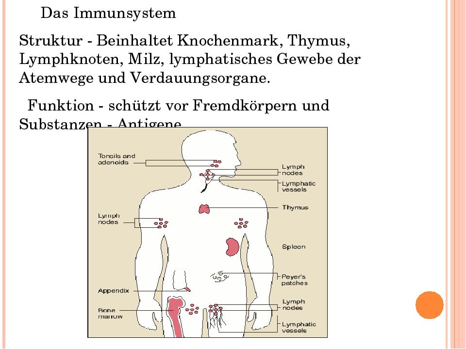 Nett Thymus Funktionen Zeitgenössisch - Anatomie Ideen - finotti.info