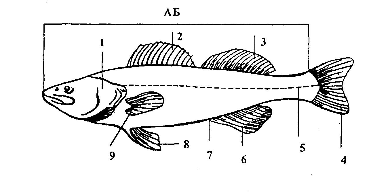 из чего состоит рыба схема картинки аксессуары комплектующие