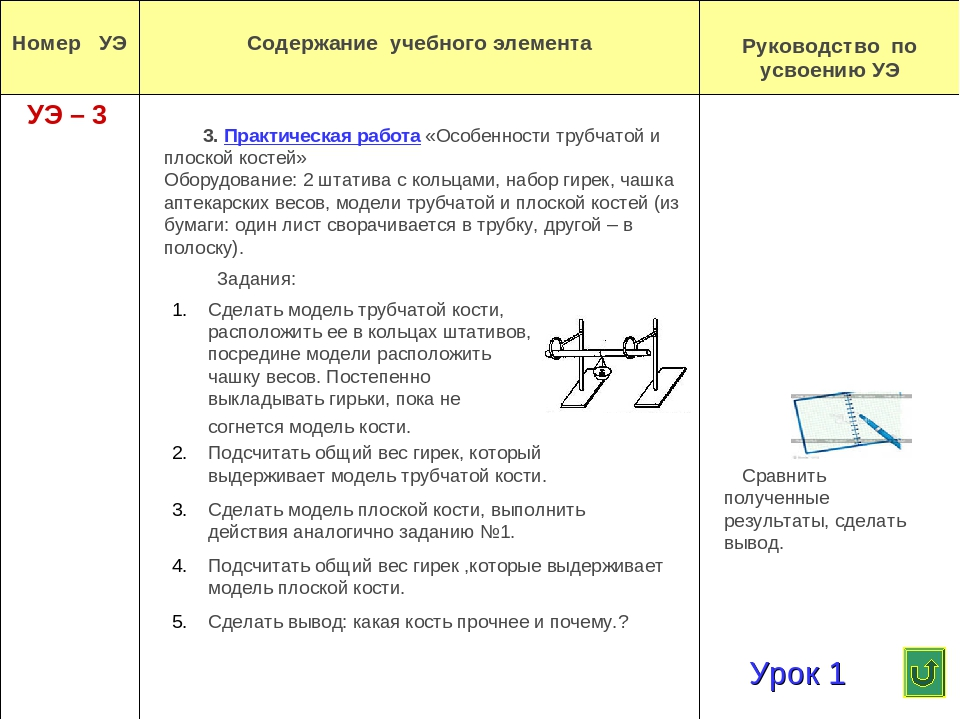 3. Практическая работа «Особенности трубчатой и плоской костей» Оборудование:...
