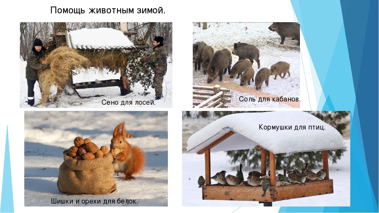 картинки на тему помощь животным зимой говорят