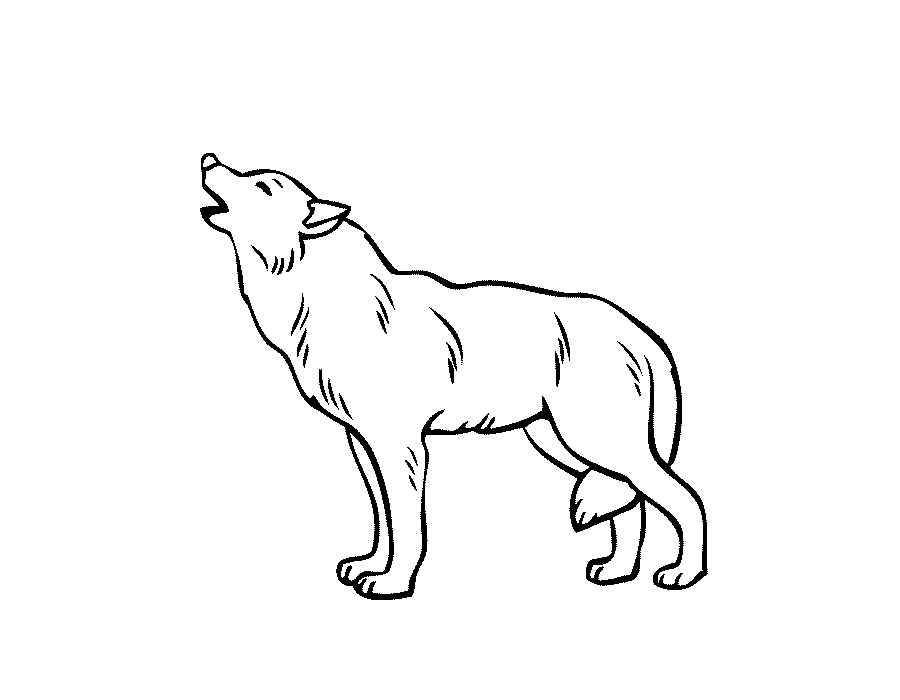 Раскраски волк распечатать
