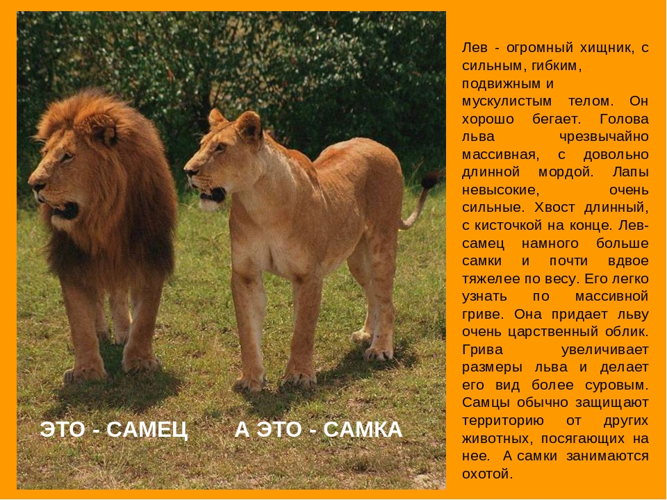 недвижимость львы фото и описание звучит