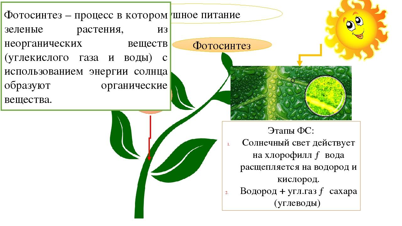 нашим доклад воздушное питание фотосинтез суммируются зависимости количества