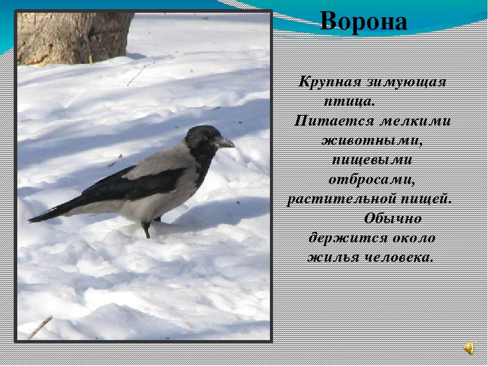 утверждает, фото и рассказы о птицах отзывы