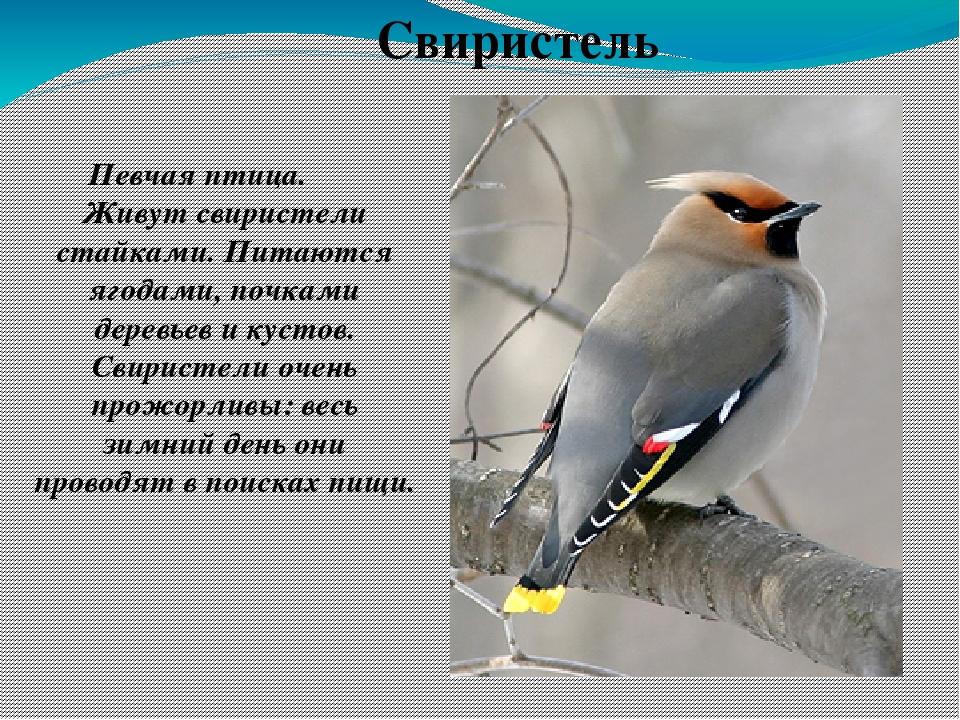 фото и рассказы о птицах таких автомобилях есть