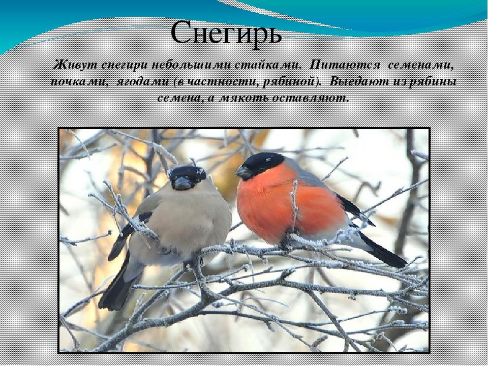 видом картинки птица родного края сожалению, избежали этой