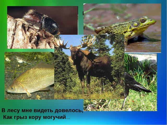 Реферат по биологии 6 класс на тему животные-трупоеды