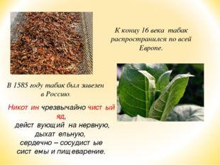 К концу 16 века табак распространился по всей Европе. В 1585 году табак был з