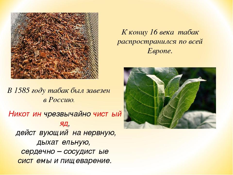 К концу 16 века табак распространился по всей Европе. В 1585 году табак был з...