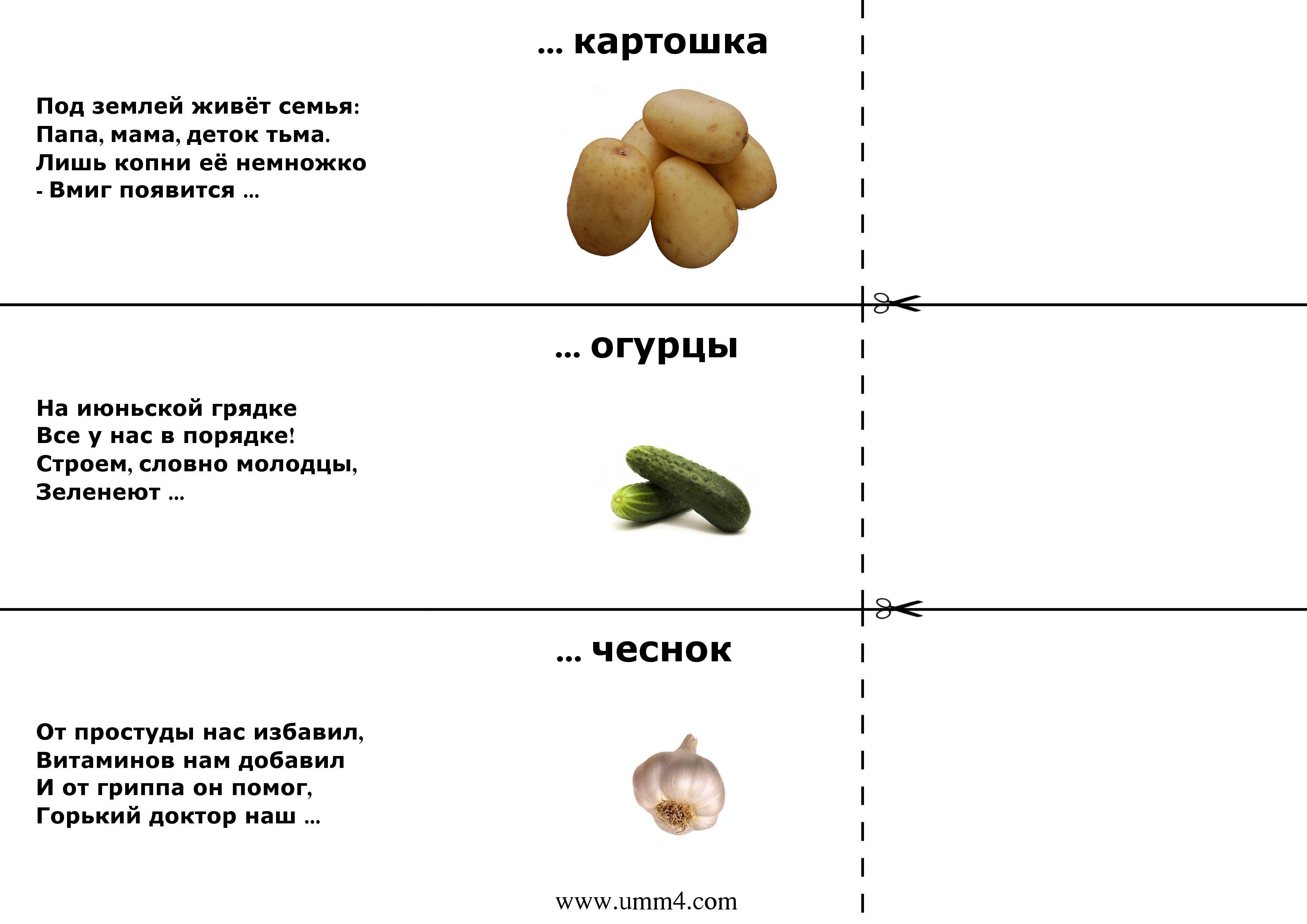 растение картинки про овощи с загадками море