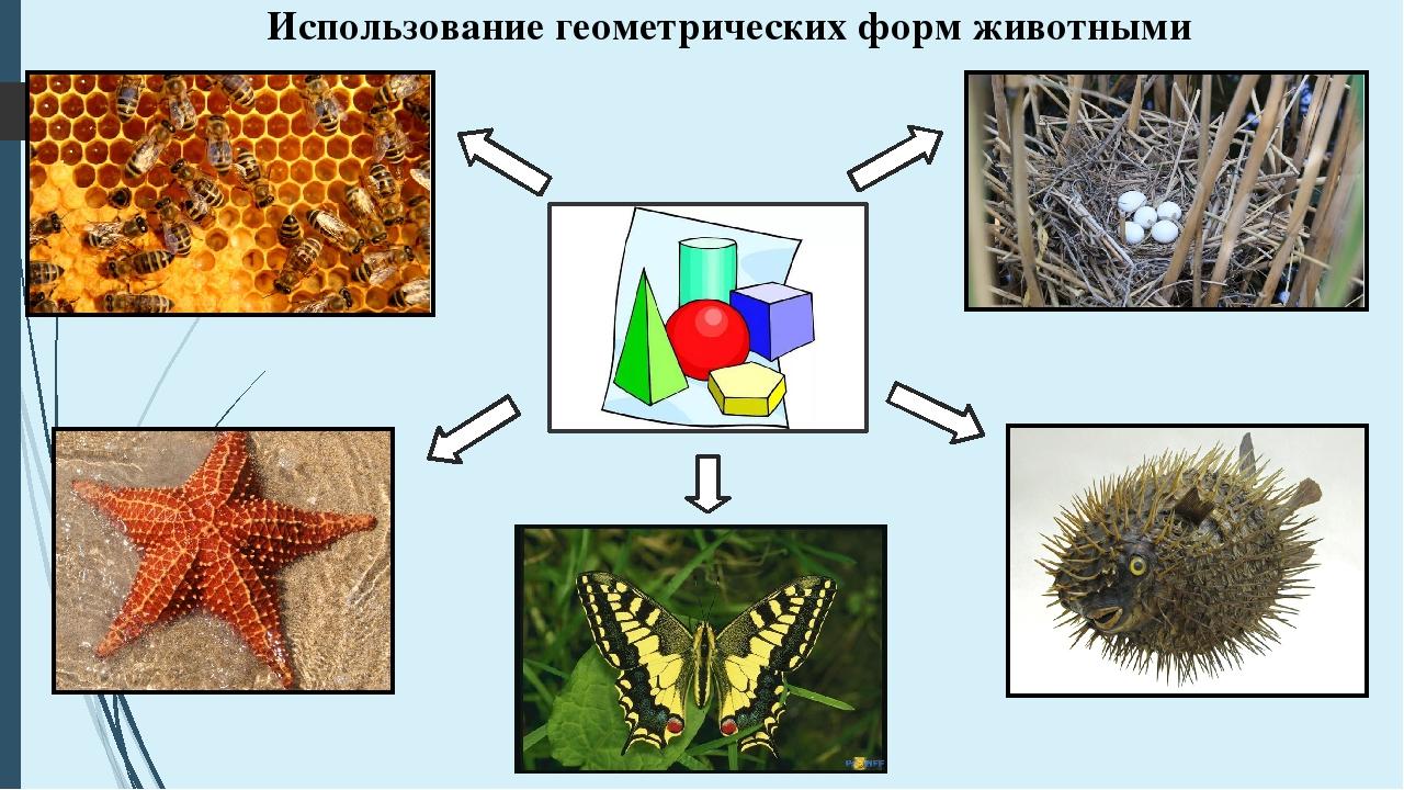 Использование геометрических форм животными