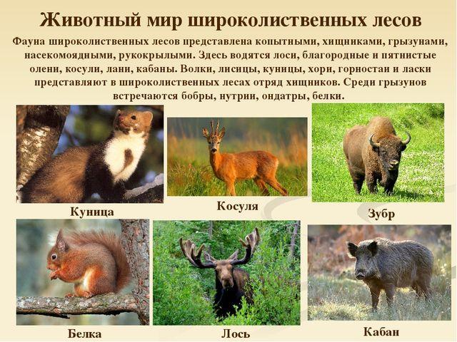 картинки смешанных лесов животные и растения уже много лет