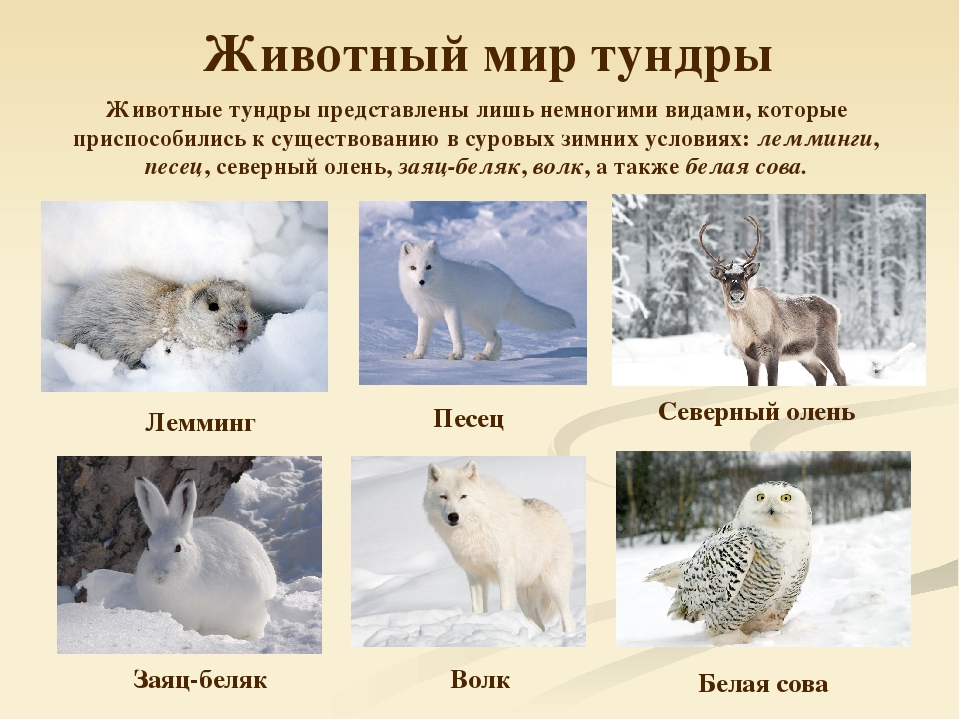 все о животных тундры с картинками новый год руками