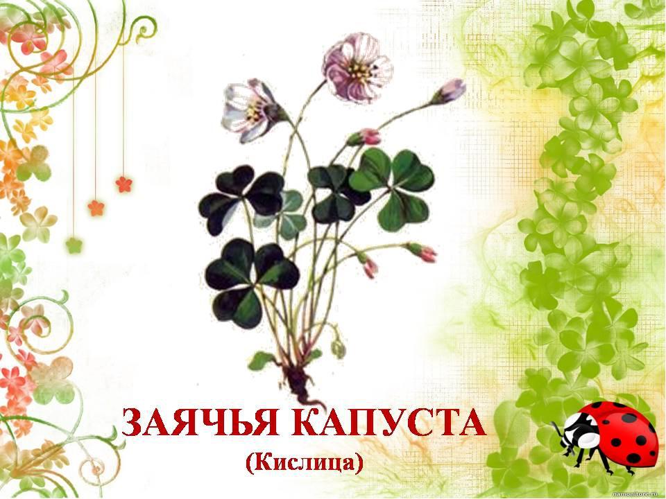 Растении картинки с надписями, открытки новый
