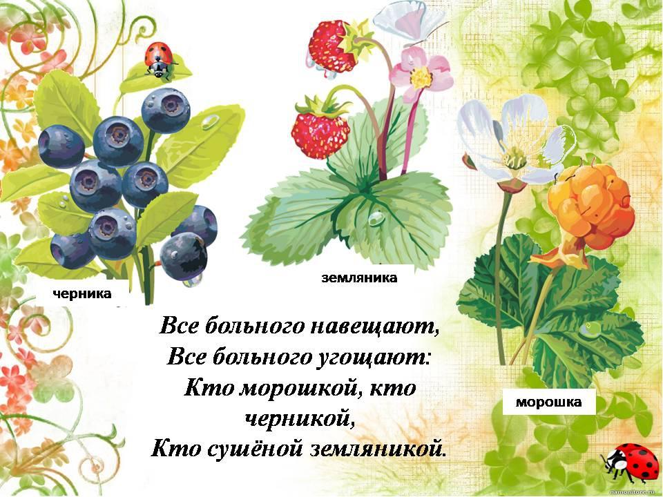 Сказки про растение с картинками