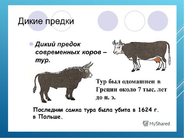 Анализ урока во 2 классе тема: домашние животные