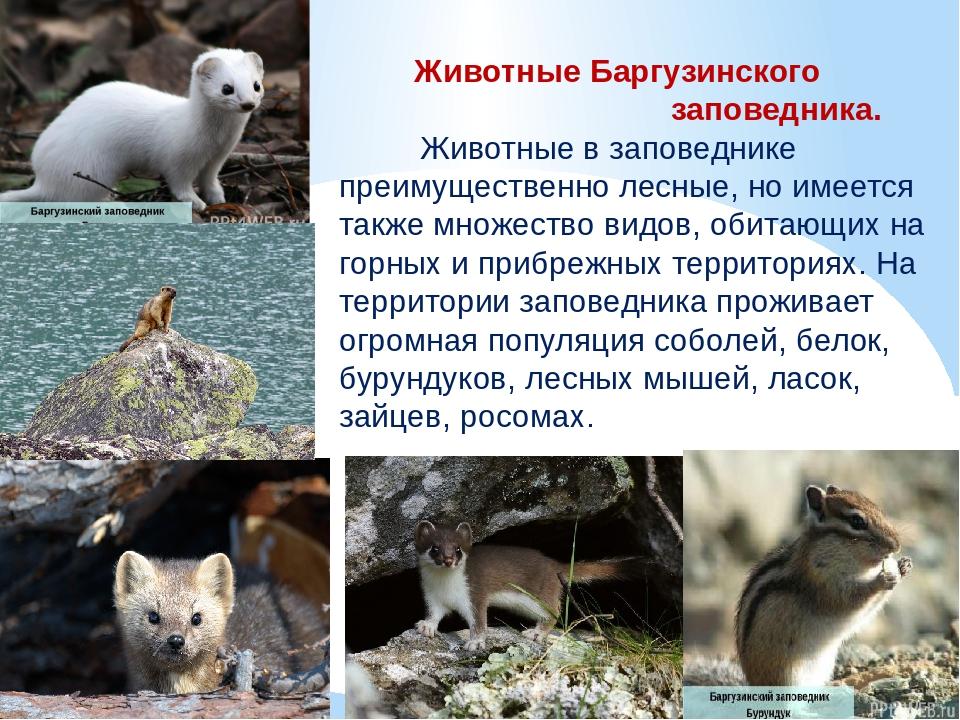 Баргузинский заповедник фото животных и растений