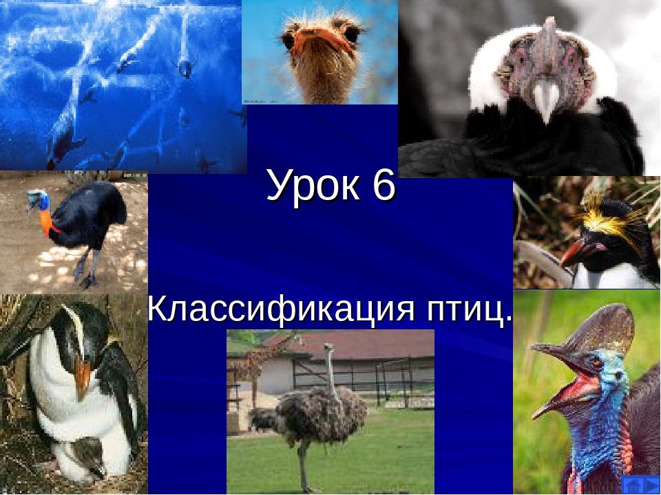 Урок 6 Классификация птиц.