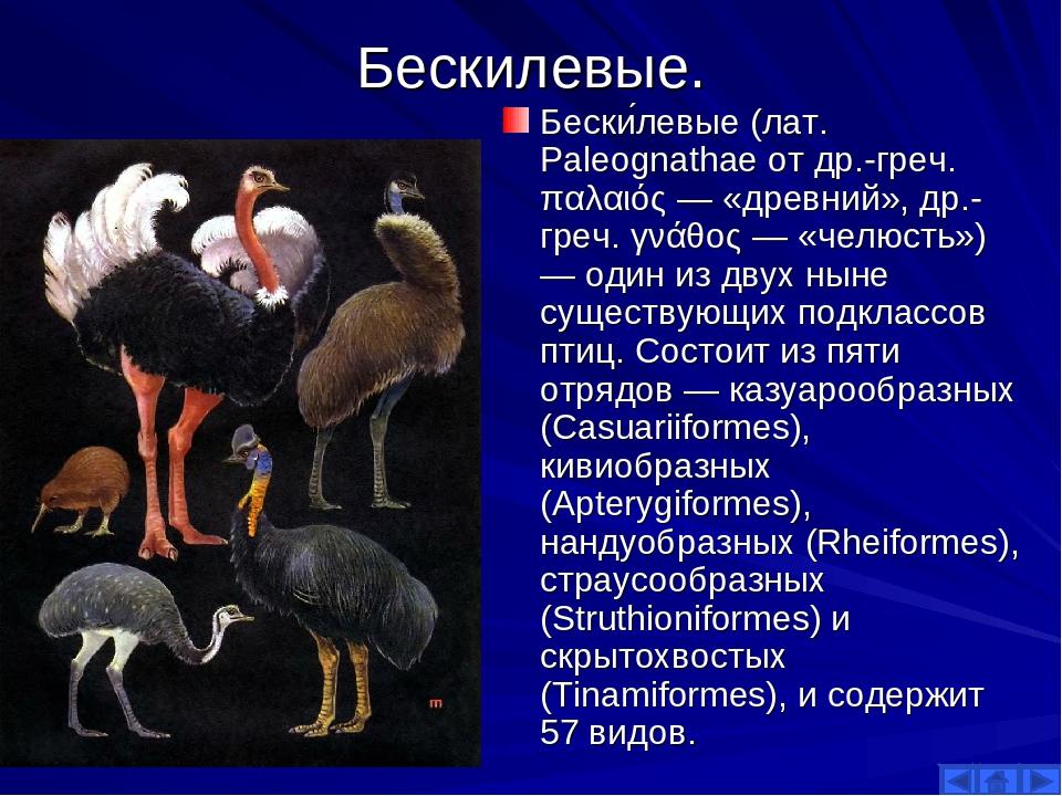 Бескилевые. Бески́левые (лат. Paleognathae от др.-греч. παλαιός — «древний»,...