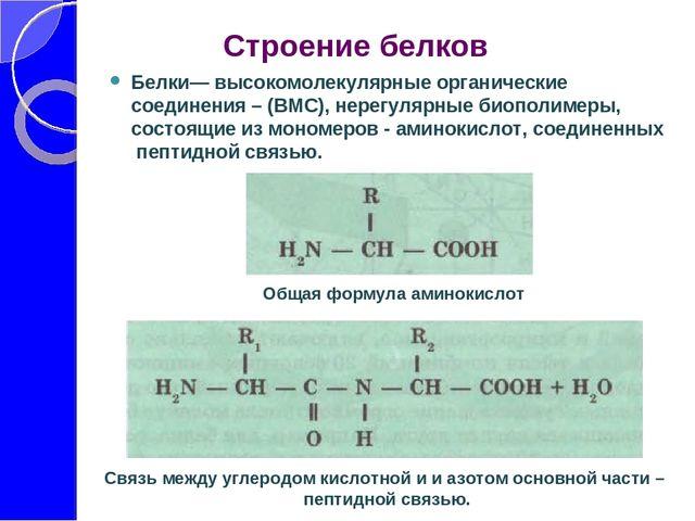 Тест белки 10 класс общая биология