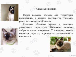 Сиамские кошки Своим название обязаны они территории проживания, а именно г