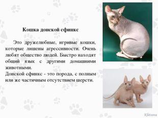 Кошка донской сфинкс Это дружелюбные, игривые кошки, которые лишены агрессив