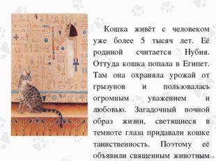 Кошка живёт с человеком уже более 5 тысяч лет. Её родиной считается Нубия. О