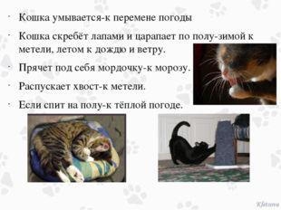 Кошка умывается-к перемене погоды Кошка скребёт лапами и царапает по полу-зим