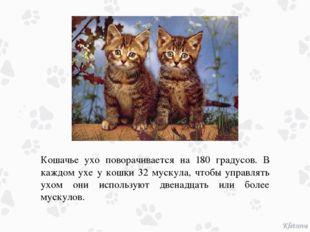 Кошачье ухо поворачивается на 180 градусов. В каждом ухе у кошки 32 мускула,
