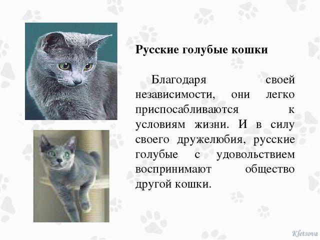 Русские голубые кошки Благодаря своей независимости, они легко приспосаблив...