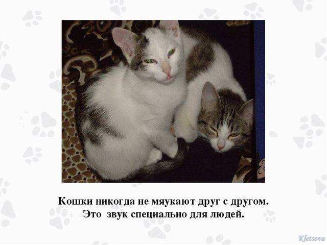 Кошки никогда не мяукают друг с другом. Это звук специально для людей.