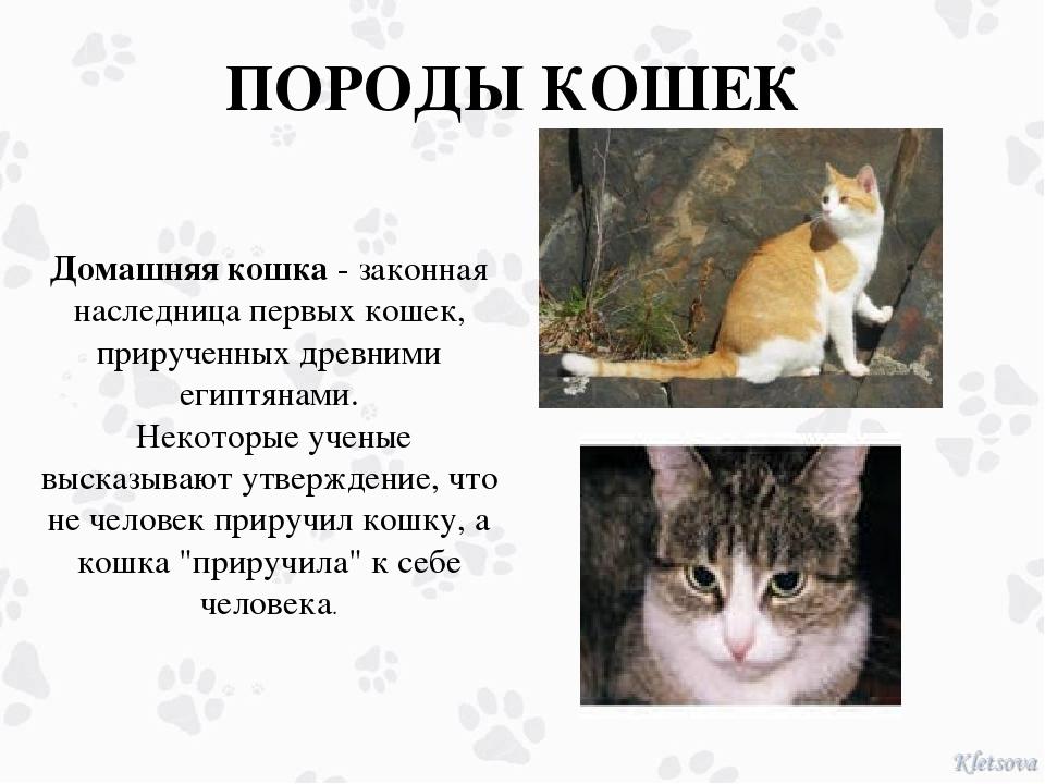 ПОРОДЫ КОШЕК Домашняя кошка - законная наследница первых кошек, прирученных д...