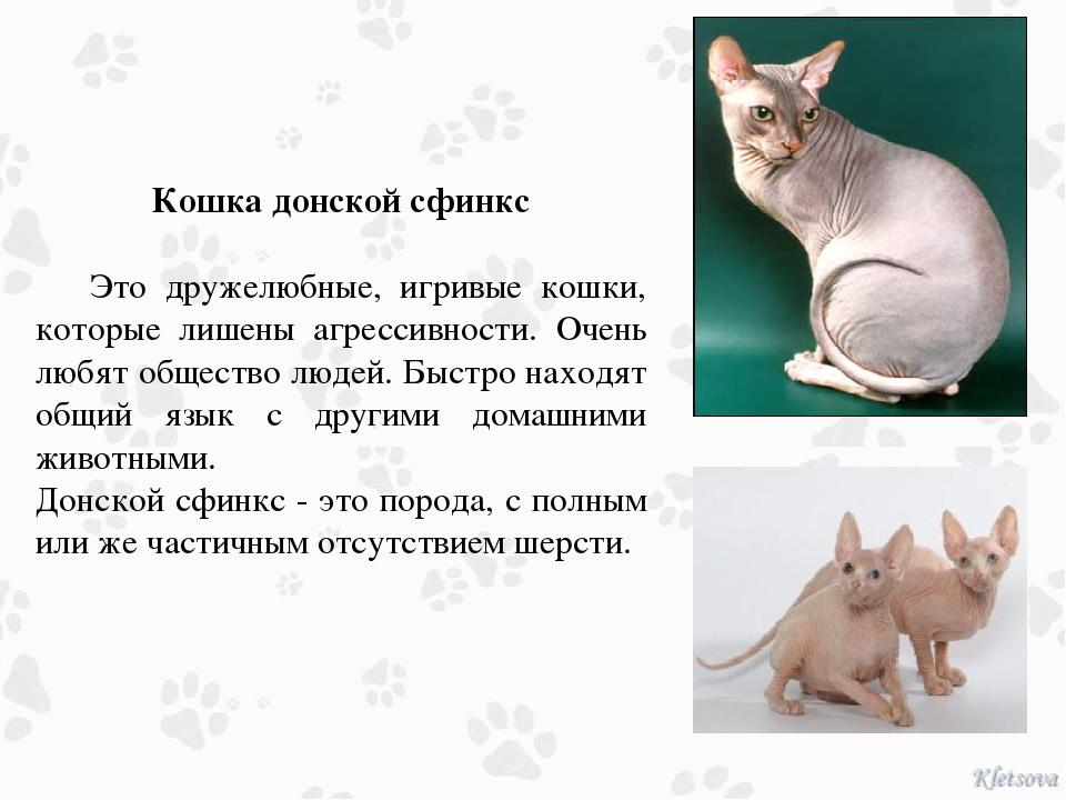 Кошка донской сфинкс Это дружелюбные, игривые кошки, которые лишены агрессив...