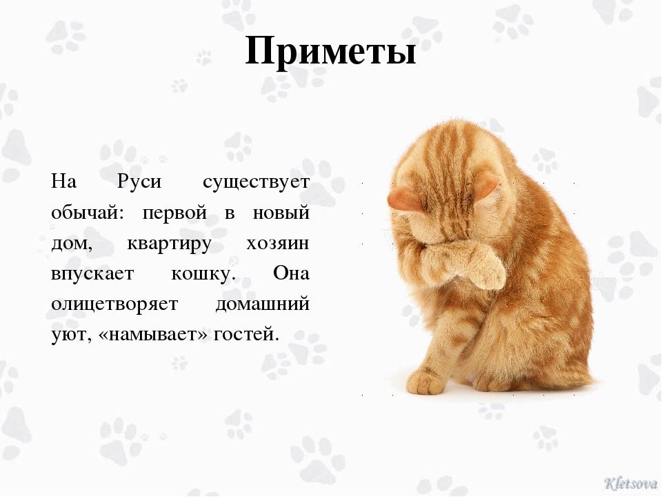 Приметы На Руси существует обычай: первой в новый дом, квартиру хозяин впуска...