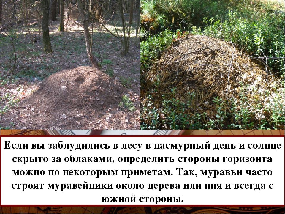 Если вы заблудились в лесу в пасмурный день и солнце скрыто за облаками, опре...