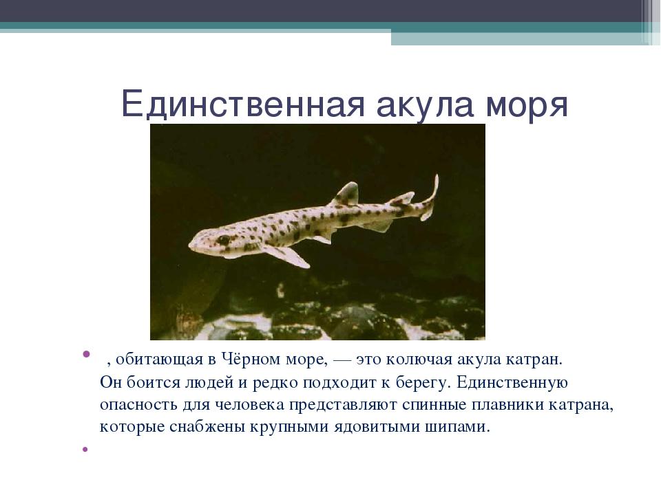 Единственная акула моря , обитающая вЧёрном море,— это колючая акула катра...