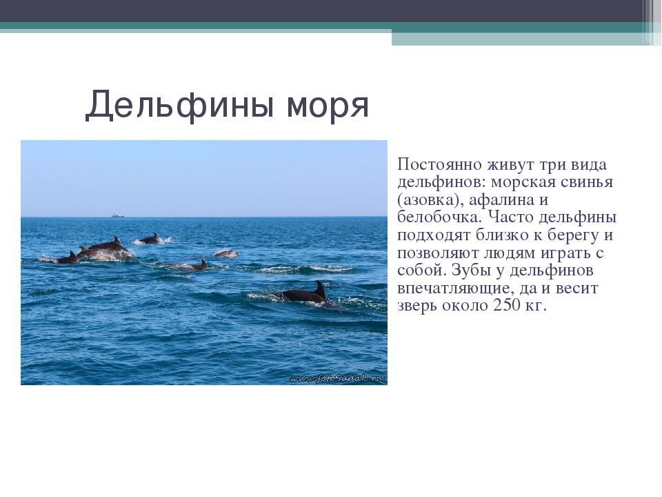 Дельфины моря Постоянно живут три вида дельфинов: морская свинья (азовка), аф...