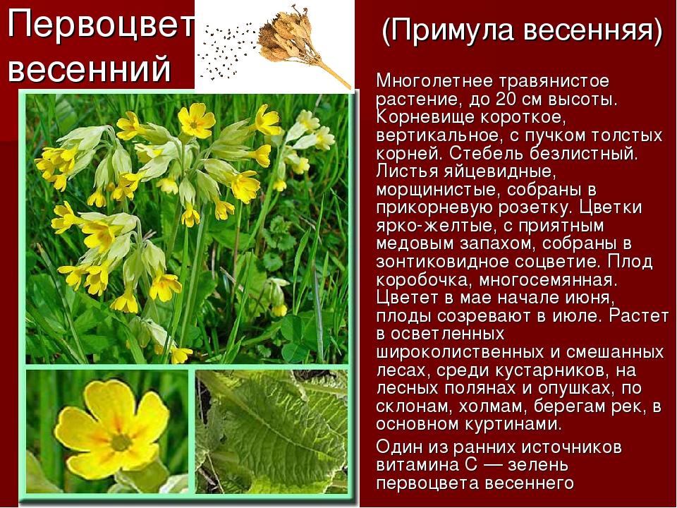 предлагаем цветы первоцветы фото и описание добиться этого