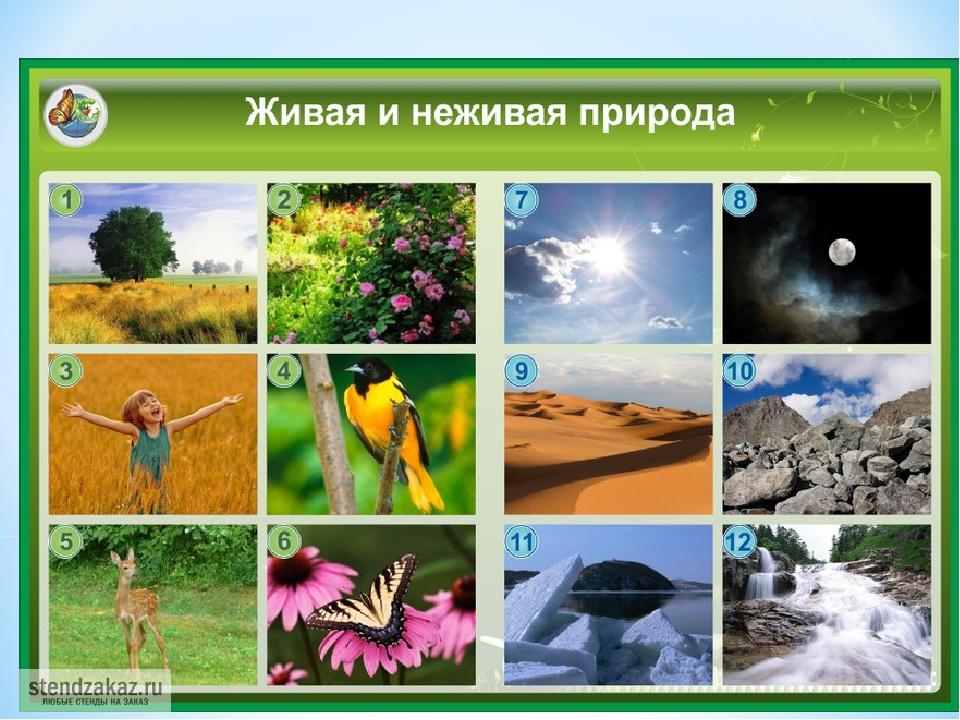 Живая природа и неживая картинки окружающий мир